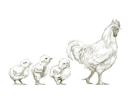 Ilustración dibujo estilo de pollo Foto de archivo - 97156217