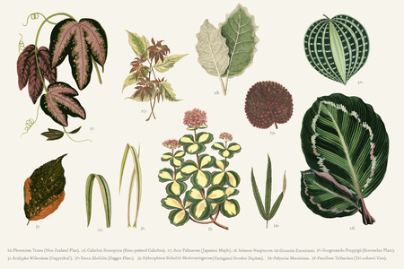 Collection of leaves found in (1825-1890) New and Rare Beautiful-Leaved Plants. Digitally enhanced from our own 1929 edition of the publication. Stock Photo - 97155697