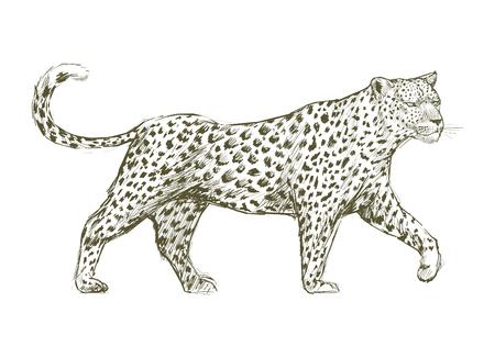 Animals Illustration Art Set 스톡 콘텐츠