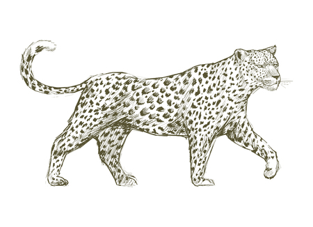 Animals Illustration Art Set Banco de Imagens