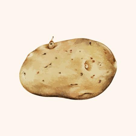 Painting of a potato Stock Photo