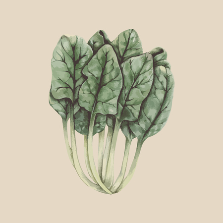 Painting of a vegetable