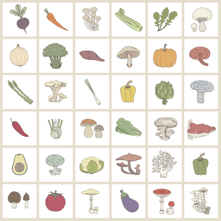 Drawings of vegetables and mushrooms Stockfoto