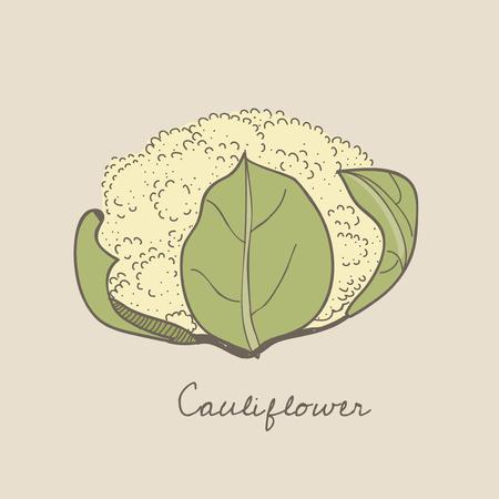 Illustration of a cauliflower