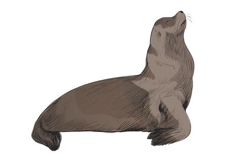 해양 생물 컬렉션의 그림 그리기 스타일 스톡 콘텐츠 - 97153692