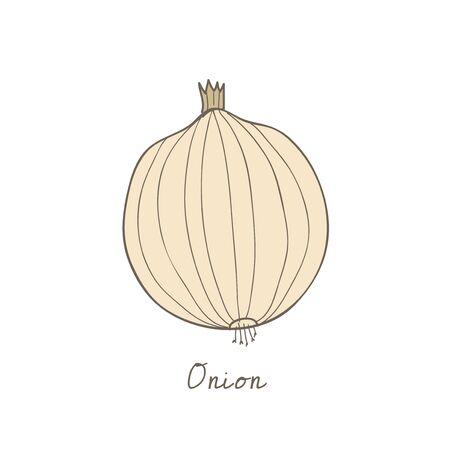 Ilustración de una cebolla Foto de archivo - 97154673