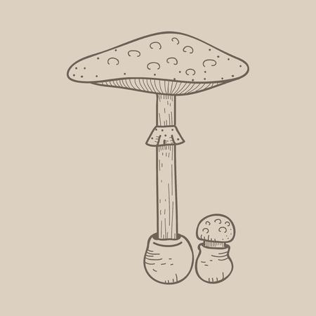 Abbildung des Pilzes Standard-Bild - 97154415