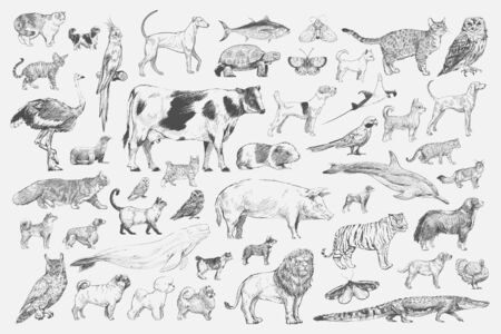 Illustration drawing style of animal collection Foto de archivo