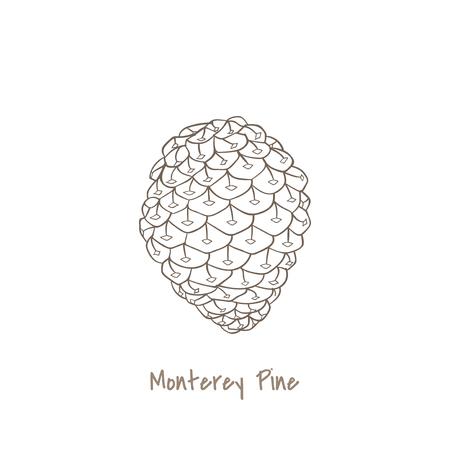 Illustration of a monterey pine Stock Photo