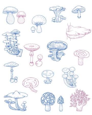 Illustration of different kinds of mushrooms 스톡 콘텐츠 - 97153617
