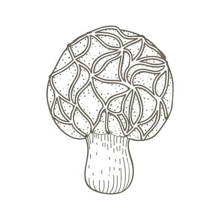 Illustration of mushroom