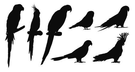 Illustrationszeichnungsart der Papageienvogelsammlung Standard-Bild - 97736566