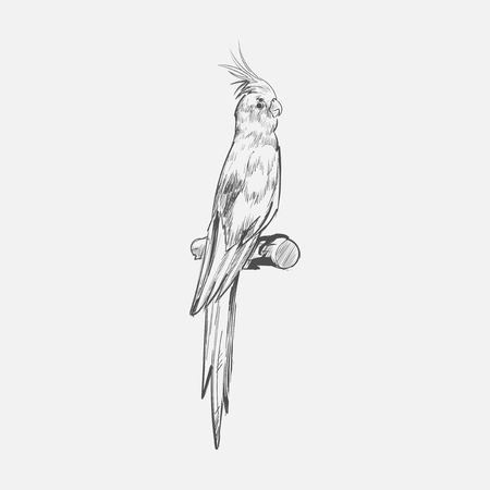 Illustration drawing style of parrot Banco de Imagens