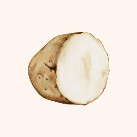 Illustration of a sliced potato
