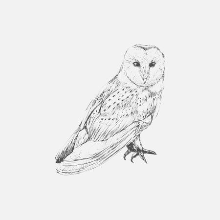 Illustration drawing style of owl Standard-Bild - 97632099
