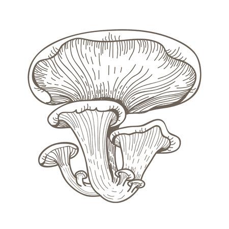 버섯의 그림 스톡 콘텐츠