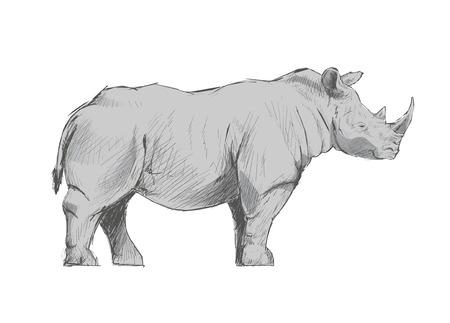 Illustration drawing style of rhino