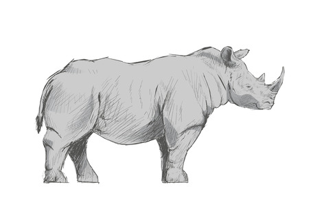 Illustration drawing style of rhino