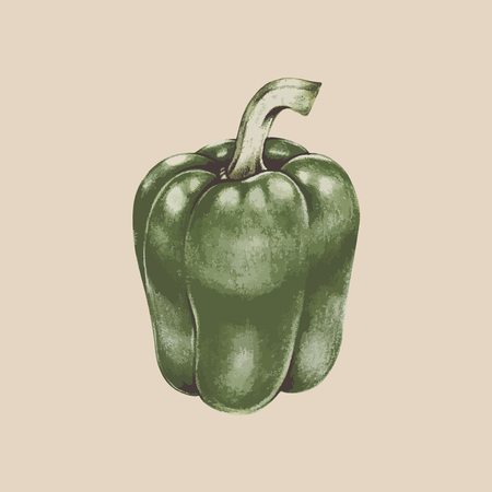 Drawing of a capsicum Stock Photo