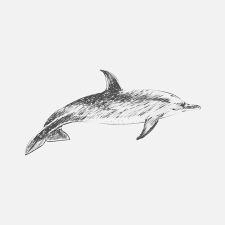 Illustration drawing style of atlantic dotted dolphin