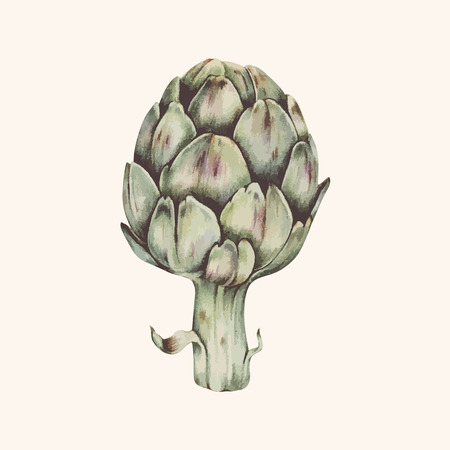 Drawing of an artichoke 写真素材