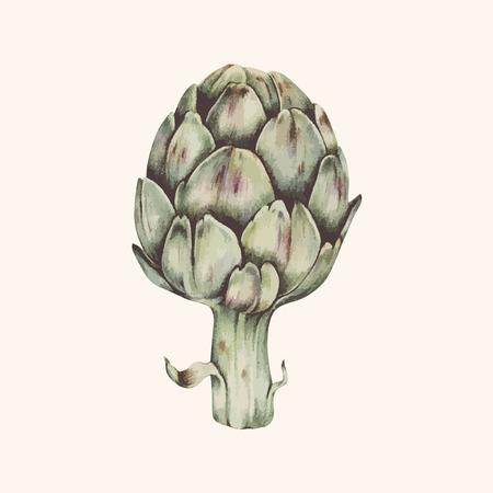 Drawing of an artichoke Stock Photo