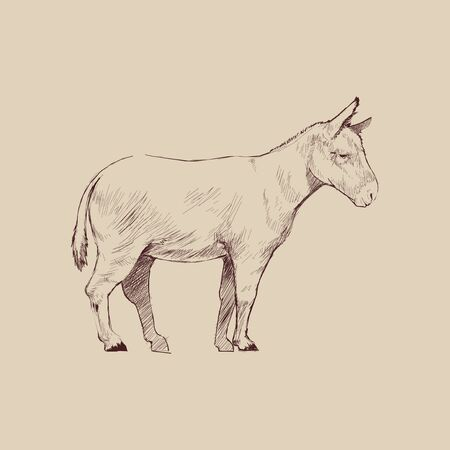 Illustration drawing style of donkey Stockfoto