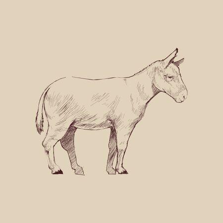 Illustration drawing style of donkey Stock Photo