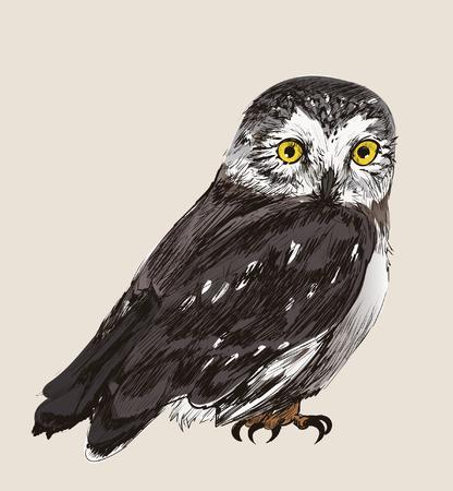 Illustration drawing style of owl Standard-Bild - 97630349