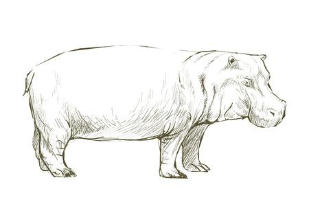 カバの動物のイラスト