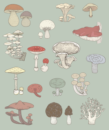 Illustration of different kinds of mushrooms 스톡 콘텐츠 - 97630513