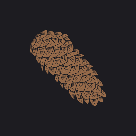 Illustration of a pine cone