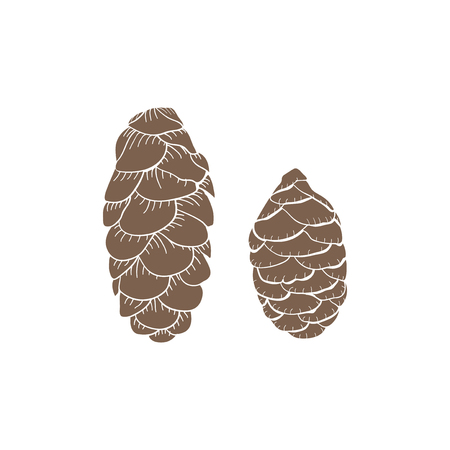 Illustration of pinecones Banco de Imagens - 115729405