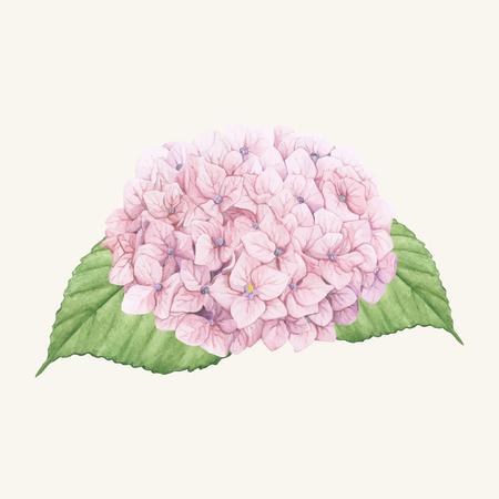 Hand drawn hydrangea flower isolated Фото со стока