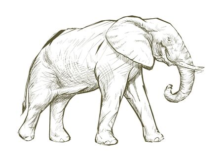 Illustratie tekenstijl van olifant Stockfoto - 98006683
