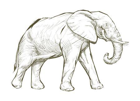 Illustration drawing style of elephant