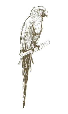 Illustration drawing style of parrot Stock Photo