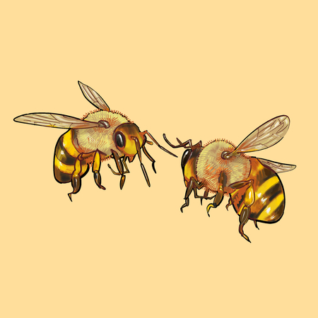 Illustration of bees Stockfoto