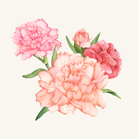 Hand drawn carnation flower isolated
