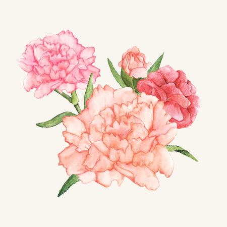 Hand gezeichnete Nelke Blume isoliert Standard-Bild - 98666190