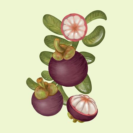 Illustration of mangosteens