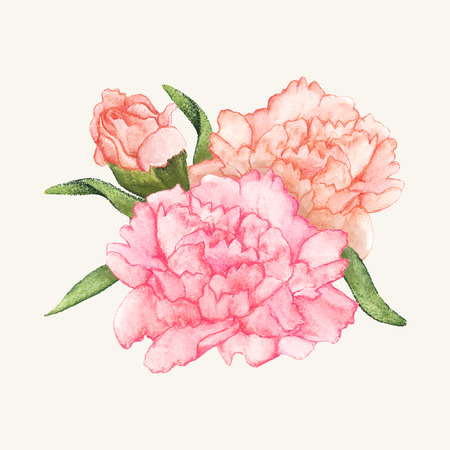 Hand drawn carnation flower isolated Stok Fotoğraf - 98707596
