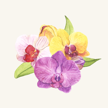 Hand drawn orchid flower isolated Stok Fotoğraf