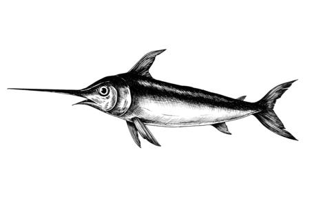 Hand drawn swordfish isolated