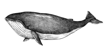 Hand drawn blue whale retro style Фото со стока