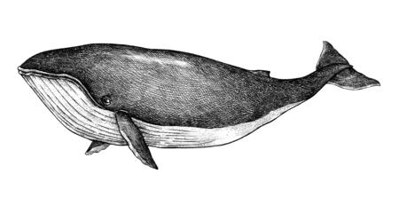Hand drawn blue whale retro style Standard-Bild