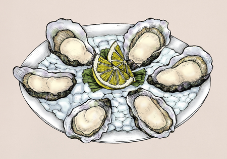 Hand drawn oyster salt-water bivalve platter