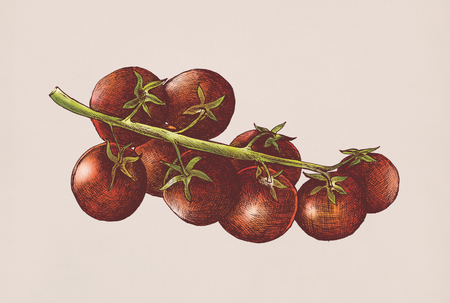 Illustration of fresh tomatoes