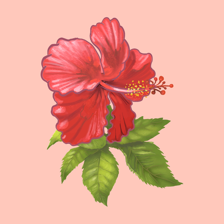 Illustration of a hibiscus flower