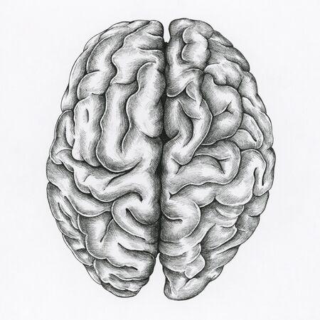 Hand gezeichnetes Gehirn lokalisiert auf Hintergrund Standard-Bild - 99963024